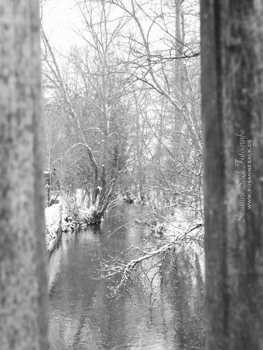 SusanneSackFotografie-5674